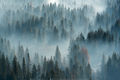 Evergreen Trees, Smoke, Yosemite National Park, prescribed burn