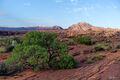 Arizona, desert, Green, Landscape, Life