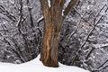 snow, Durango, Colorado, Tree, Throne, Animas River, nature, landscape photography