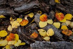 Nature's Autumn Fireplace (2020) print