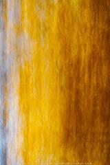 Autumn Color Pallette Abstract (2020) print