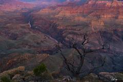 Dawn Awakening at the Grand Canyon (2020) print