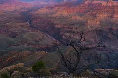Dawn Awakening at the Grand Canyon print
