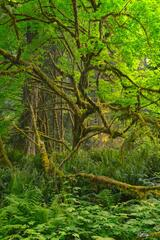 Forest Demogorgon (2021) print