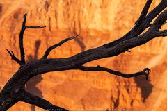 Desert Branch print