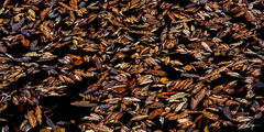 Suspended Autumn Detrifis (2019) print