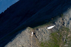 Mountain Deer (2021) print