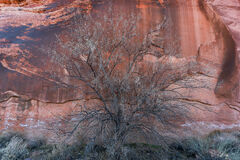 The Sandstone Tree (2021) print