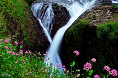 Twister Falls Flowering (2014) print