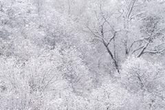 Winter Trees (2021) print