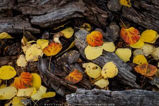 Nature's Autumn Fireplace (2020)