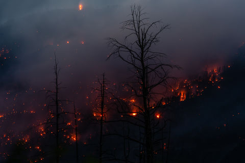 416 Fire, Colorado, Durango, Flames, Hermosa, Smoldering, trees