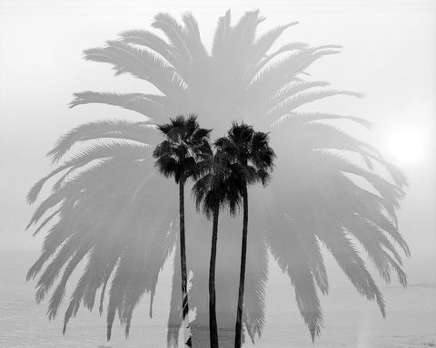B&W, Beach, Black and White, California, Coast, Coastal, Heisler Park, Horizontal, Laguna Beach, Mamiya RZ67, Monochrome, Multiple Exposure, Orange County, Palm Trees, Plants, Southern California, Tre