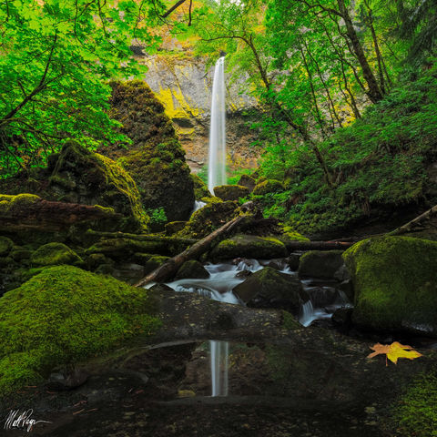 Columbia River Gorge, Elowah Falls, Green, Landscape, Lush, Mossy, Nature, Oregon, Portland, Reflection, Water, Waterfalls