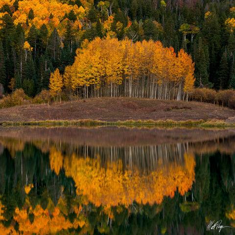Aspen Trees, Autumn, Colorado, Lake, Owl Creek Pass, Reflection, Ridgway, Silver Jack Reservoir, reflected