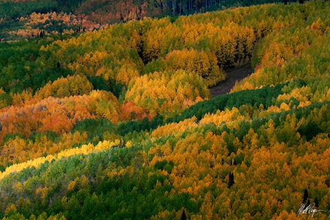Aspen Trees, Colorado, Crested Butte, Fall Colors, Light, beam