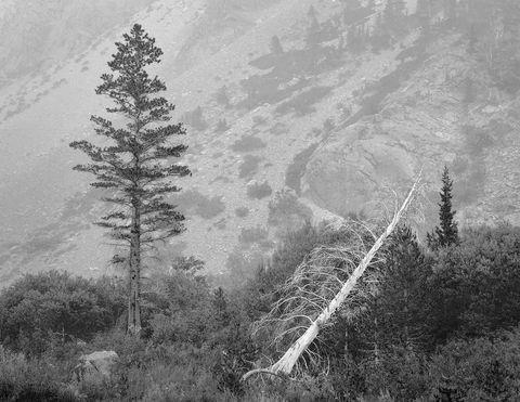 California, Eastern Sierra, lundy canyon