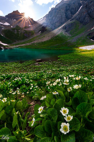 13er, Colorado, wildflowers, Island Lake, Marsh Marigold, Nature, San Juan Mountains, Silverton, Sunbeams, Sunset, Sunstar, Water, Wildflowers