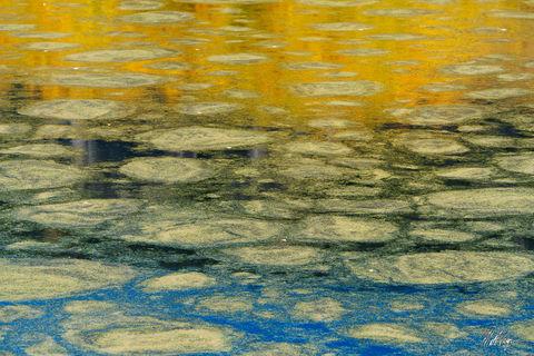 Monet (2018)