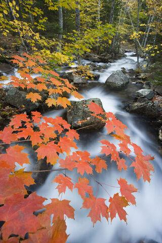 Acadia National Park, Jordan Stream, ME, Maine, Mount Desert Isl
