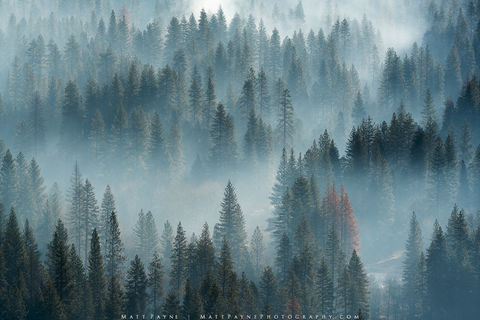 Evergreen Trees, Smoke, Yosemite National Park, prescribed burn