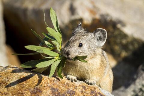 California, USA, Wildlife, Yosemite, animal, beautiful, behavior, cute, feelings, mammals, national, nature, outdoor, park