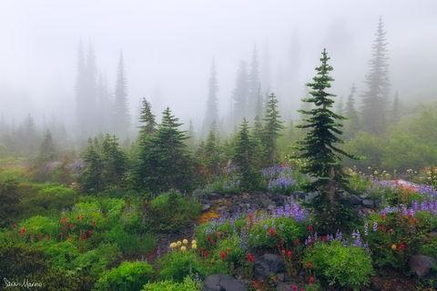 Forest, Mist, Mount Rainier National Park, Nature Photography, Pacific Northwest, Portfolio-Color-SmallScenes, Portfolio-PNW, Sarah Marino, Trees, Washington, Wildflowers
