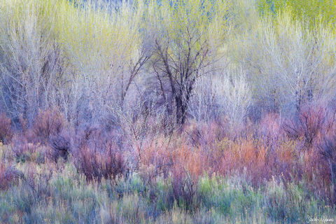 Nature Photography, Portfolio-Color-ForestTrees, Portfolio-ColoradoPlateau, Sarah Marino, Southern Utah, Spring, Trees