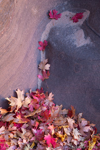 Leaves spill down the rocks