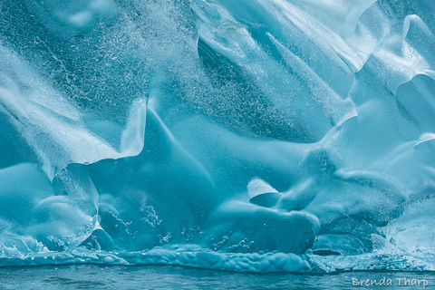 Lindblad, Tongass, Tongass National Forest, Tongass Rainforest, Tracy Arm, adventure, blue, detail, fine art print, ice, iceberg, nature, nature photography, southeast, translucent, travel, wall art,