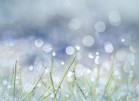 Frosty Grass Bokeh in Blue - Beth Young
