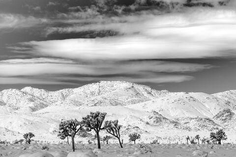 """fujifilm xf 90mm f/2"", ""fujifilm xt-2"", ""joshua tree national park"", ""joshua tree"", ""landscape photographer"", ""landscape photography..."