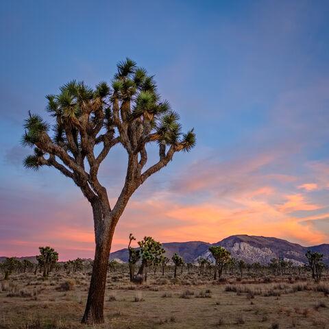 """""""joshua tree national park"""", """"joshua tree"""", """"landscape photographer"""", """"landscape photography"""", Landscapes, Nature, california..."""