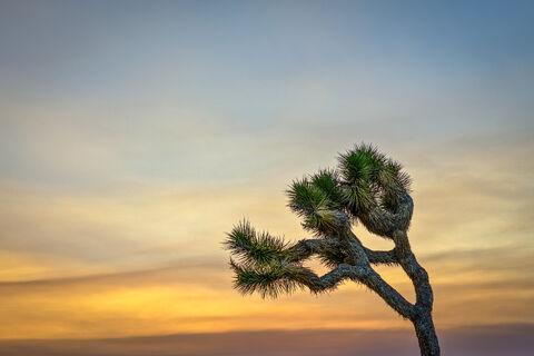 """fuji xt-2"", ""fujifilm xt-2"", ""joshua tree national park"", ""landscape photographer"", ""landscape photography"", ""zoe pamintuan""..."