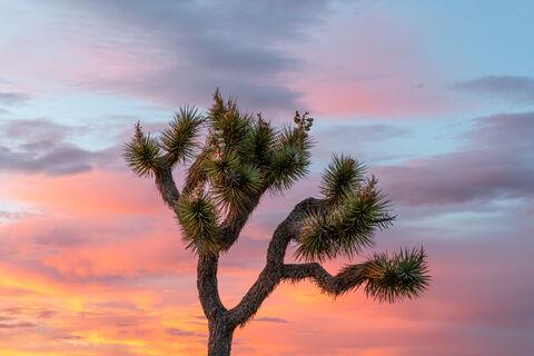 """""""joshua tree national park"""", """"joshua tree"""", """"landscape photographer"""", """"landscape photography"""", """"sony FE 55mm f1.8 ZA"""", """"sony..."""