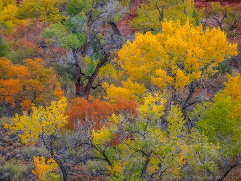 Desert Autumn Celebration