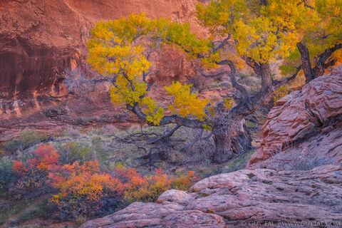 Guy Tal - Canyon Meadow
