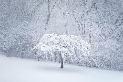 Winter Lace  - Ernesto Ruiz