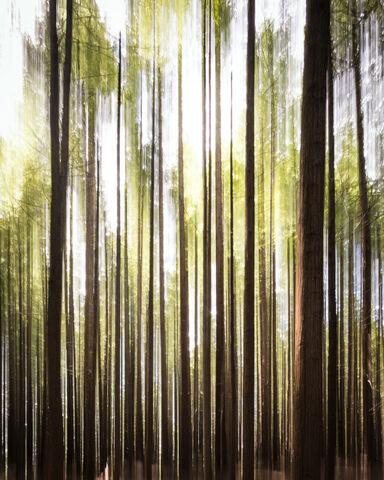 Redwoods Abstract 1  - Ernesto Ruiz