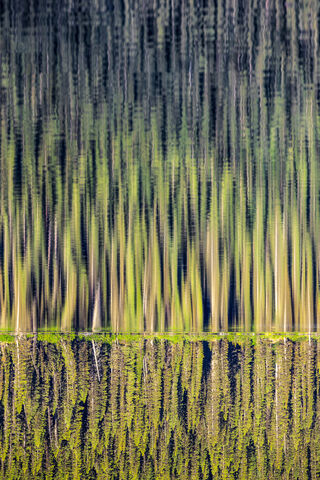 Evergreen Reflection  - Ernesto Ruiz