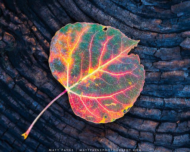 Fine Art Landscape & Nature Photography Black Friday Sale