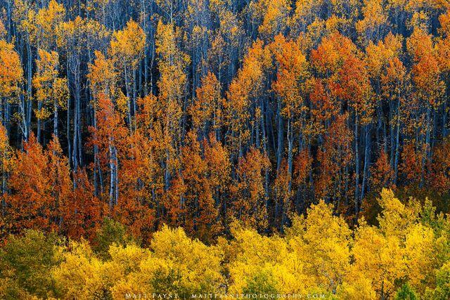 My Favorite Colorado Fall Photographs - 2020