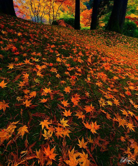 Autumn, Fall Color, Landscape, Leaves, Portland Oregon