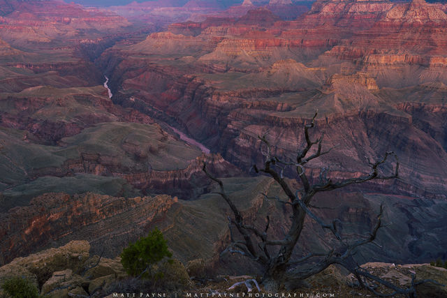 Arizona, Colorado River, Grand Canyon National Park, Grand Scenic, Grand Vista, Landscape, Sunrise, desert, tree