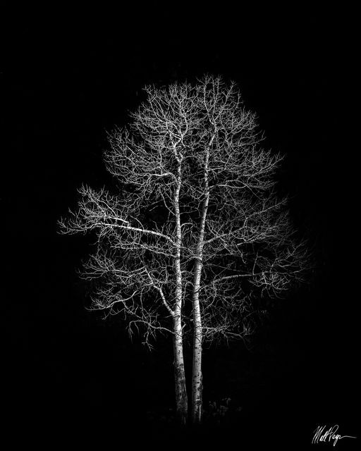Black and White, Dramatic, Low Key, Winter, Yosemite National Park, tree