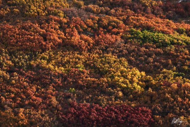 Autumn, Colorado, Colors, Rainbow, Ridgway, scrub oak, vibrant