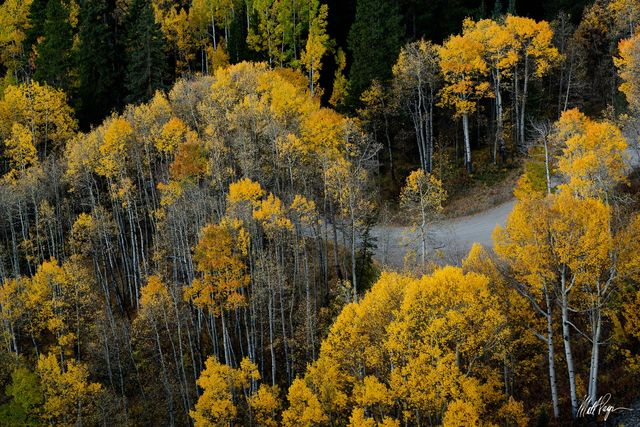 Aspen Trees, Autumn, Colorado, Country Road, Crested Butte, road