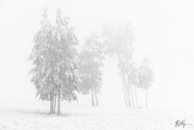 Autumn, Black and White, Colorado, Fall, Fall Colors, Landscape, Snow, storm, trees, Gunnison National Forest, isolation