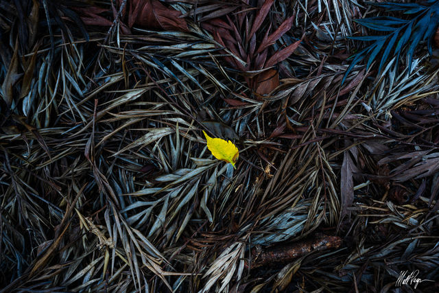 Colors, Forest Floor, Hawaii, Intimate Landscape, Kauai, Nature, Patterns, Shapes, Waimea Canyon, Wilderness, diversity, plant life