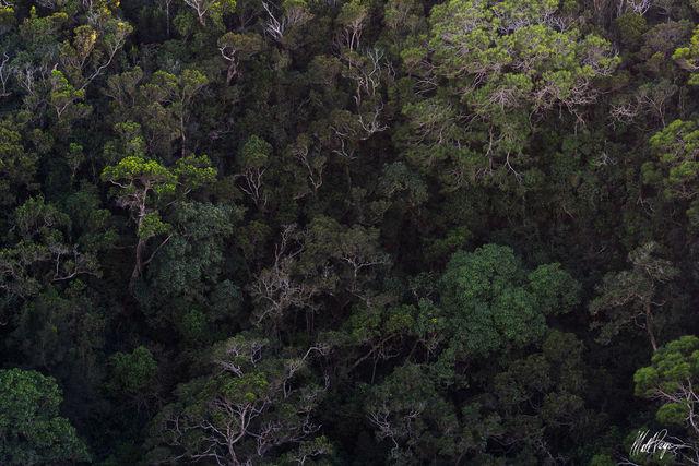 Hawaii, Jungle, Kauai, Koa, tree, Na Pali Coast, intimate landscape